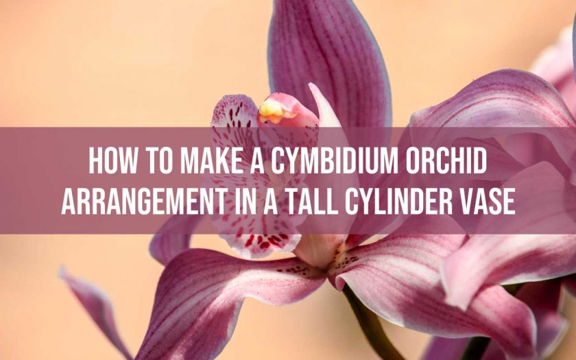 Cymbidium Orchid Arrangement