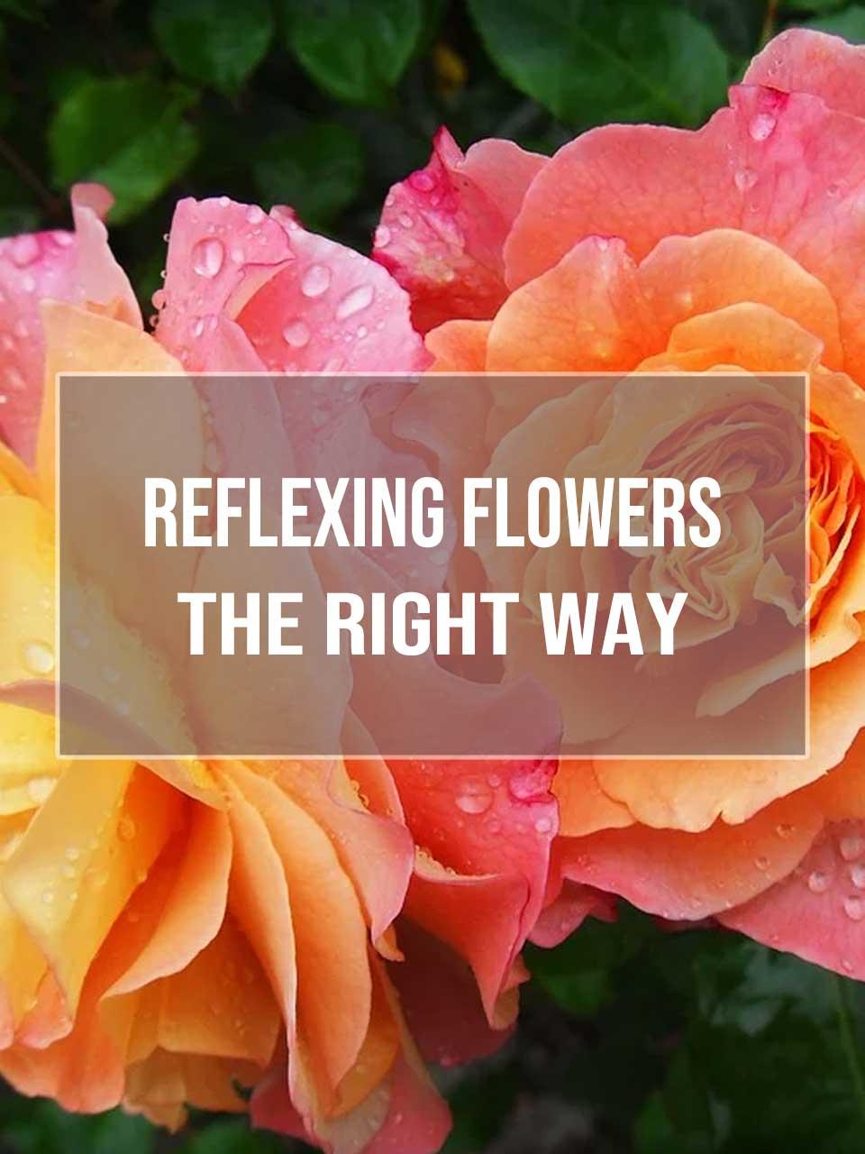 Reflexing Flowers