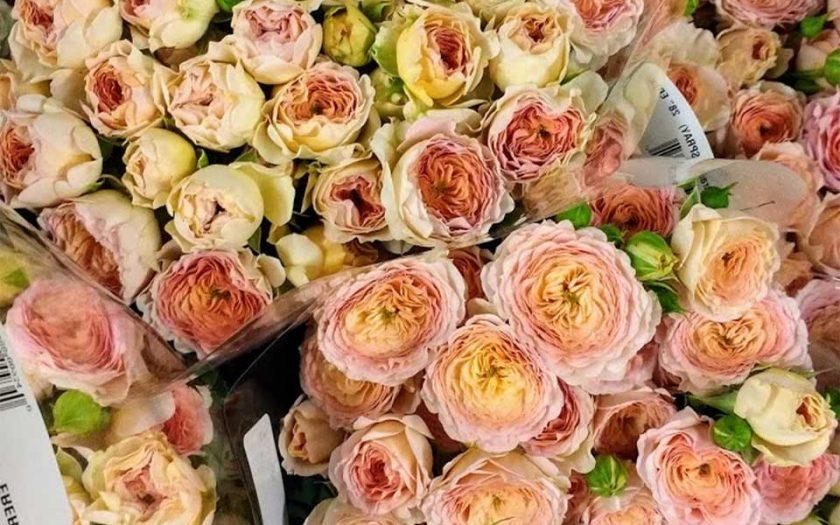 process flowers