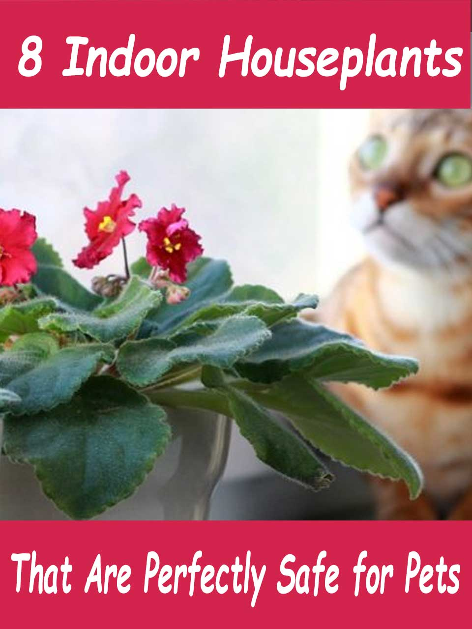 pet safe indoor houseplants