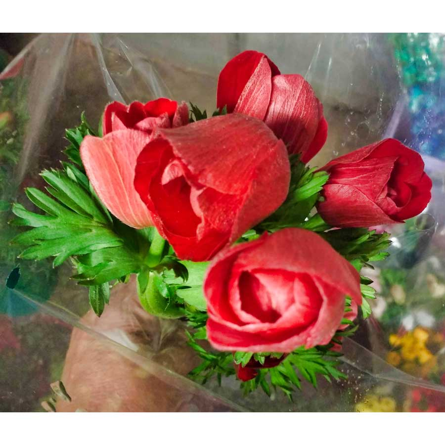 anemone care